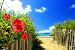 綺麗な海でサーフィンを! 沖縄のサーフィンポイント特集